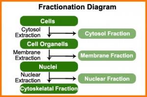 cellfractation