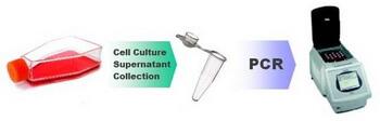 PCR_Mycoplasma_Detection_workflow