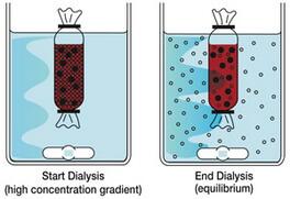 Dialysis_Fund01