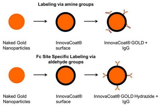 GOLD-hydrazide