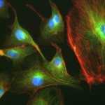 TC_Fluorescence