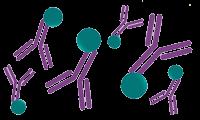 antibody_labeling_homepage (2)
