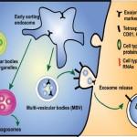 exosome