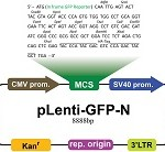 pLenti-GFP-N-pic