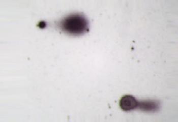 CometAssay-Silver-Staining-2-e1484149183832-350x240