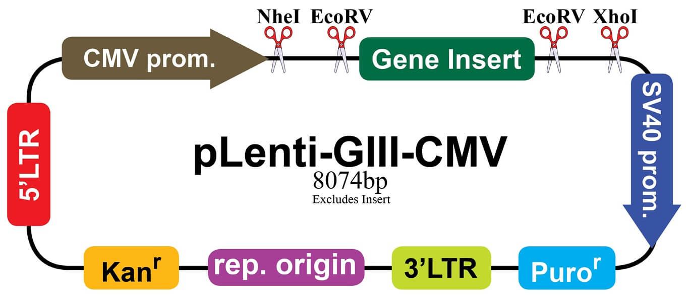 pLenti-GIII-CMV2