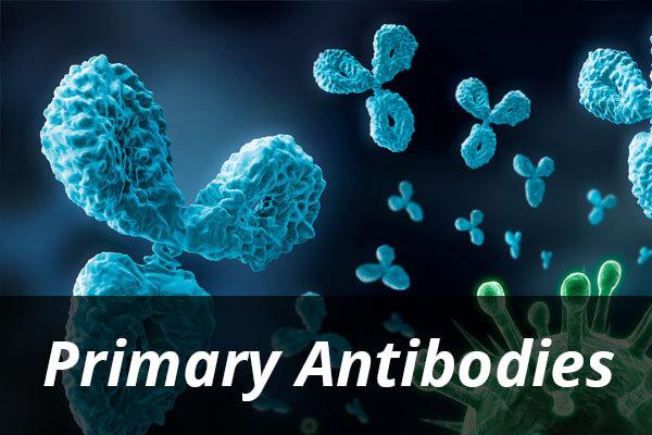 antibodies-1