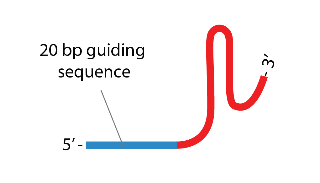 CRISPR-Sorting-Feature-Knowledge-Base-sgRNA-Design