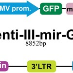 pLenti-III-mir-GFP2