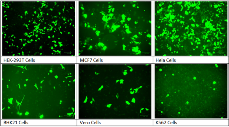 G2100 Transfection reagent