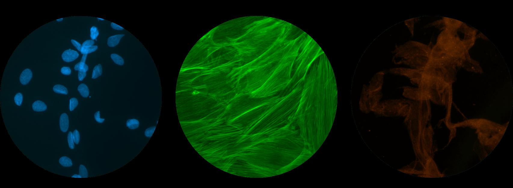 fluorescence 1