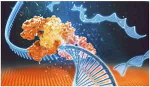 NGS-Enzymes