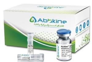 purkine-1
